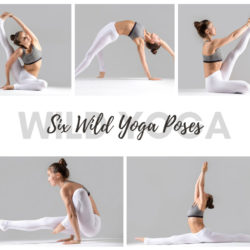 Check out our six wild yoga poses for advanced yogis